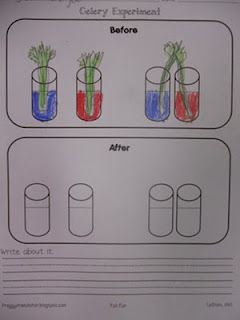 Zany image with celery experiment printable worksheet