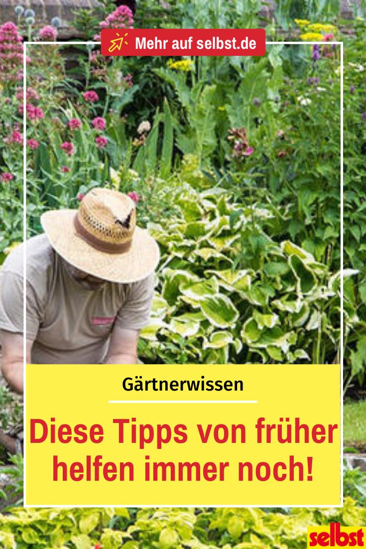 Photo of Gesammeltes Gartenwissen von früher!