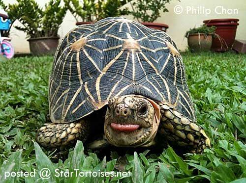 Personality Of Star Tortoises カメ 亀 かめ