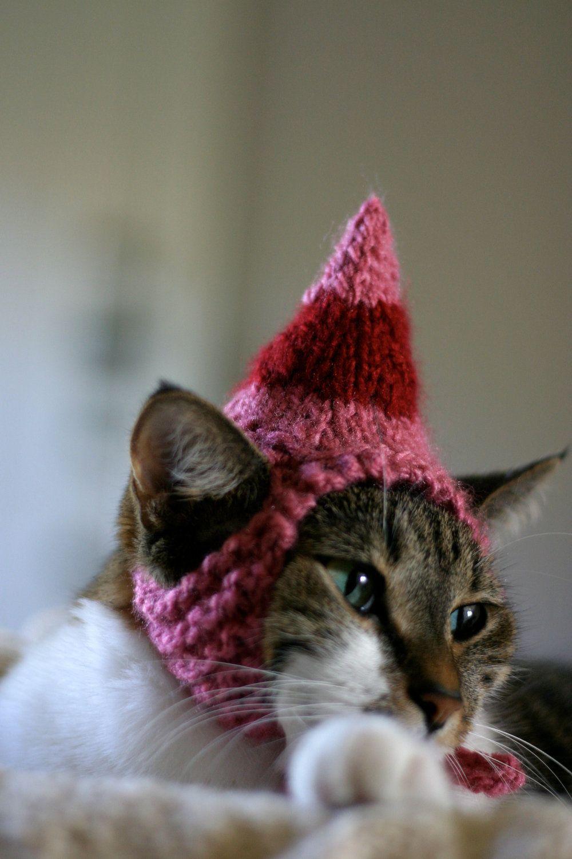 Jovie the Elf Cat Hat Christmas Pet Costume Elf cat, Pet