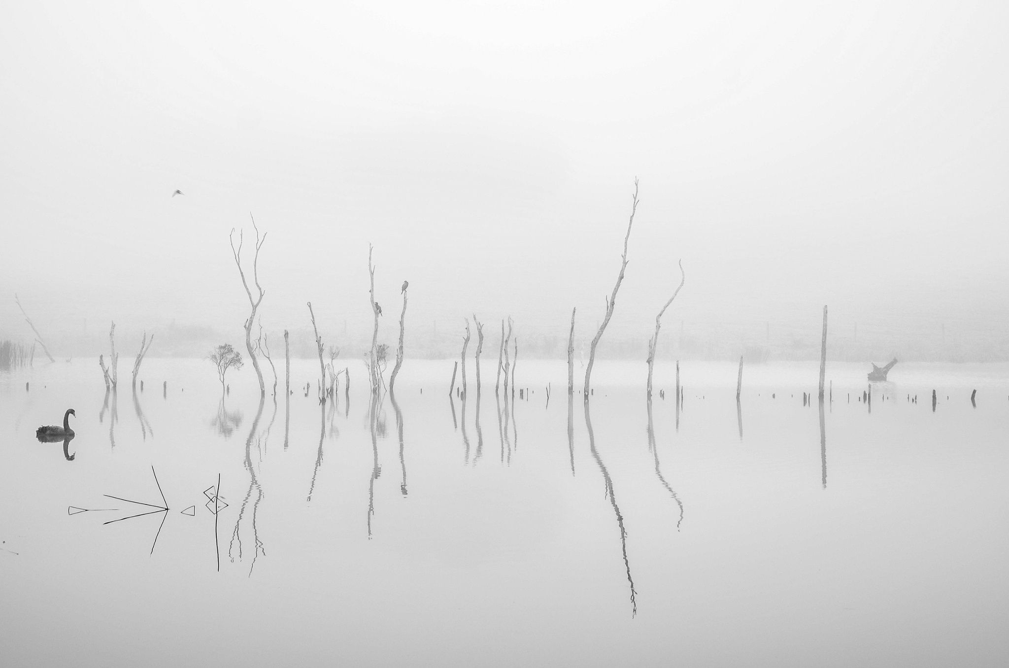 Reflecting on a Foggy Morning by Charlie Hamilton on 500px