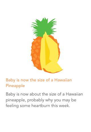 My baby is the size of a Hawaiian Pineapple via Ovia Pregnancy