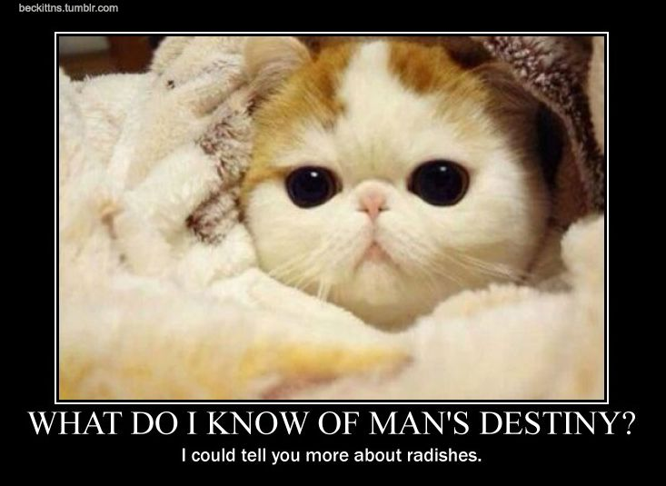 Samuel Beckett Motivational Cat Posters Cute Animals Funny Cat