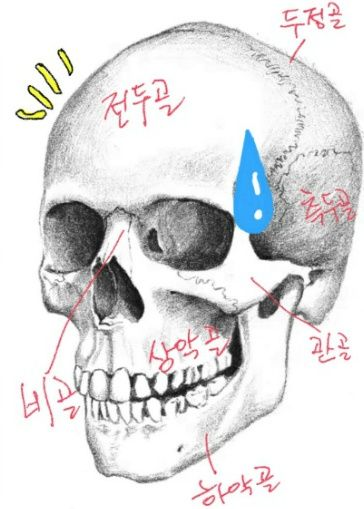 인체해부-두개골 바로(?)알기 | Anatomy, Face anatomy and Anatomy tutorial