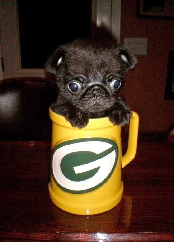 Pug In A Mug Cute Pugs Baby Pugs Pugs