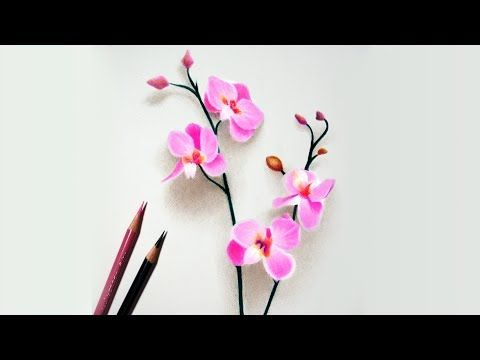 Step By Step How To Draw Color A White Magnolia Flower With Colored Pencils Emmy Kalia Youtu Color Pencil Drawing Flower Drawing Colored Pencil Tutorial