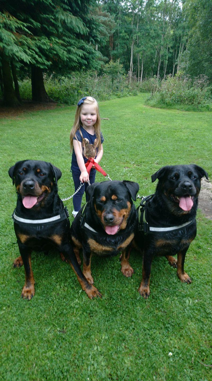Rottweiler Rottweiler Rottweiler Puppies Rottweiler Dog