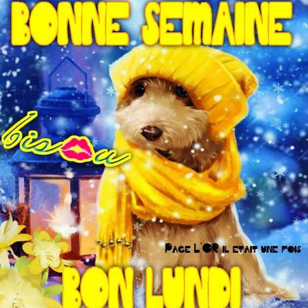 Bonne Semaine, Bon Lundi #lundi chien froid hiver bonnet echarpe mignon  lanterne bisou | Bon lundi, Lundi, Image bonjour