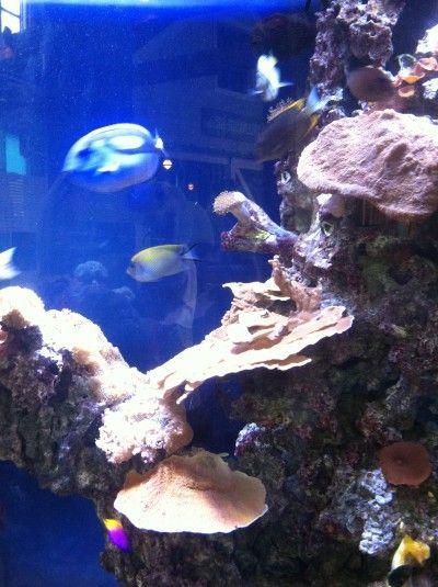 What's new at the Maritime Aquarium in Norwalk, CT?
