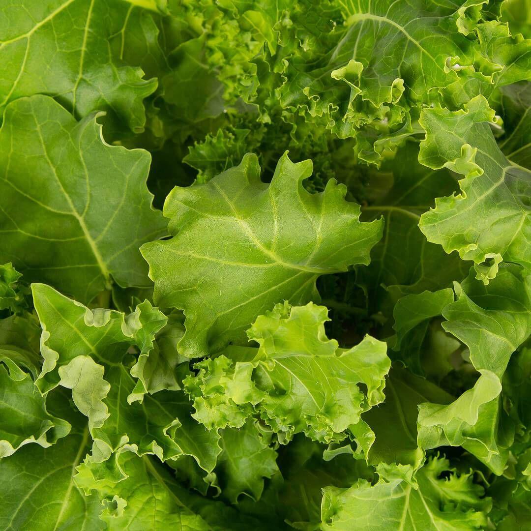 How to grow kale tips and tricks plantui smart garden