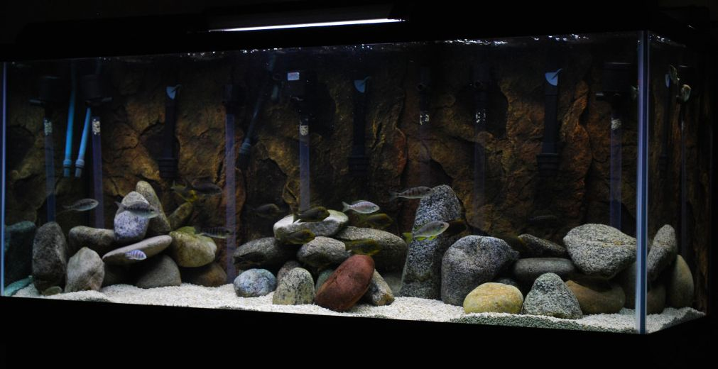 Love the use of rocks here you can find pond rocks for 3d fish tank