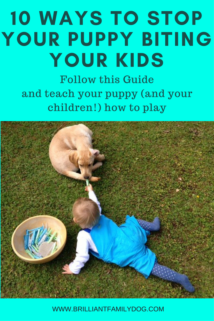 10 Ways To Stop Puppy Biting Puppy Biting Stop Puppy From