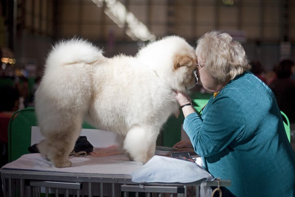 Photos Of The Day March 8 Chinese Dog Chow Chow Dogs Dogs