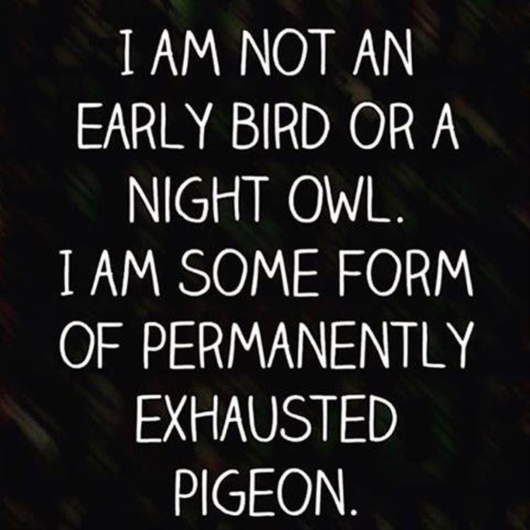 Humor Inspirational Quotes: Funny Pictures Of The Day