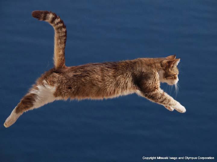 ギリシャ ネコギャラリー Iwago 動物写真家 岩合光昭 オリンパス 世界ネコ歩き 飛び猫 ネコ
