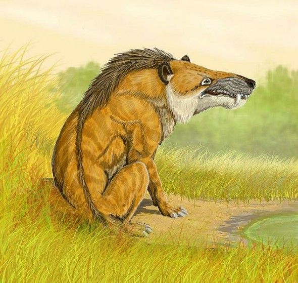 Andrewsarchus, An extinct mammal with an enormous skull; possibly the largest…