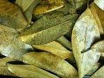 Leaf Litter - Magnolia
