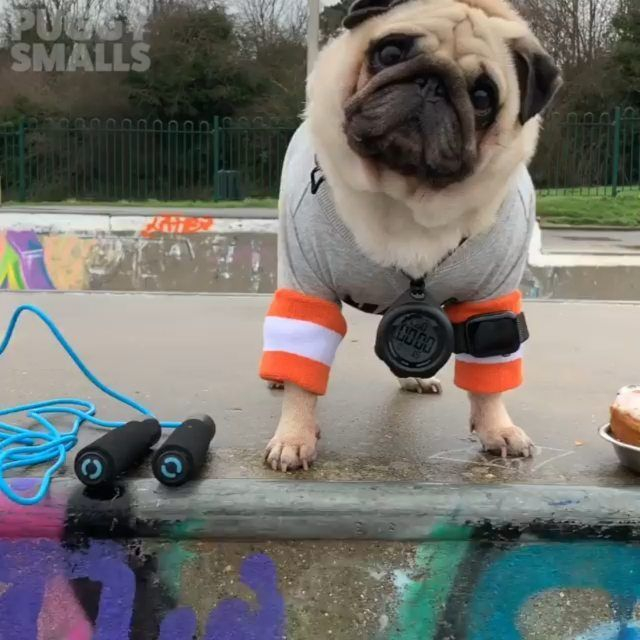 Pin By Pugs For Life On Pin Your Best Pugs Pug Pictures Cute Pugs