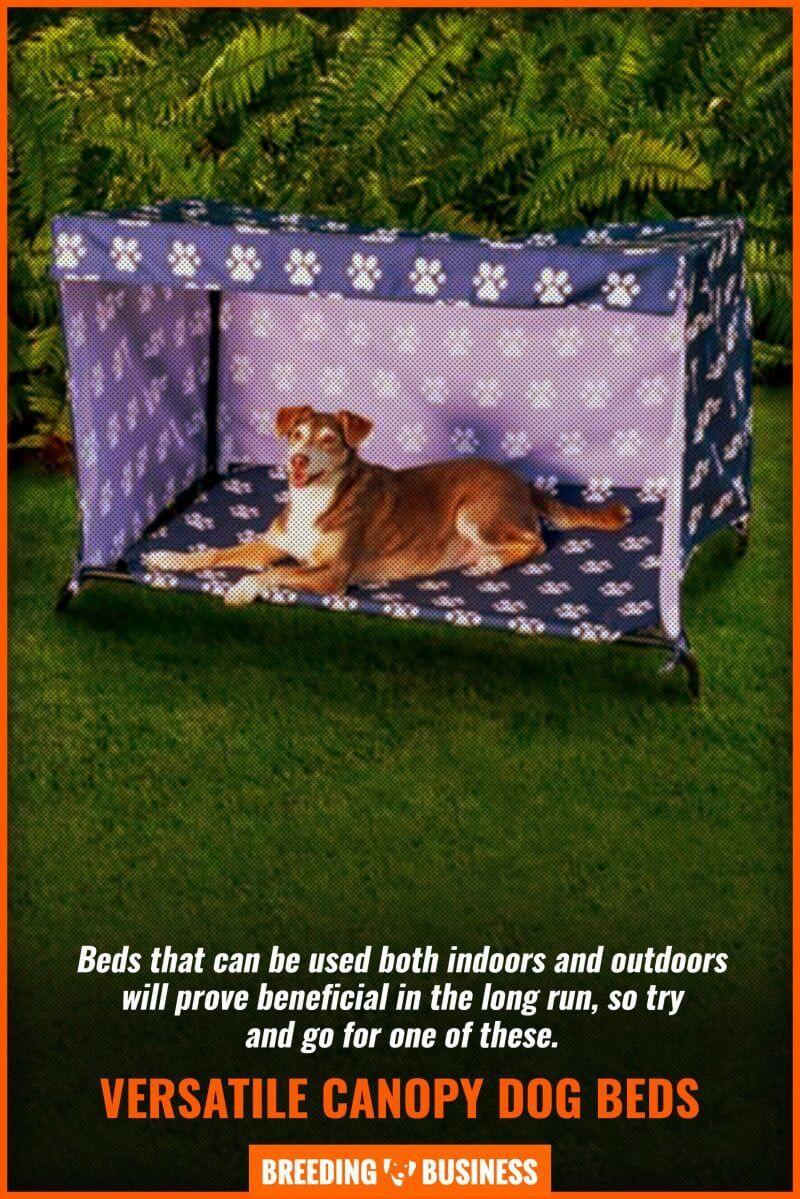 10 Best Dog Beds With Canopy Indoor Outdoor Elevated Faqs Cool Dog Beds Dog Bed Dog Canopy Bed