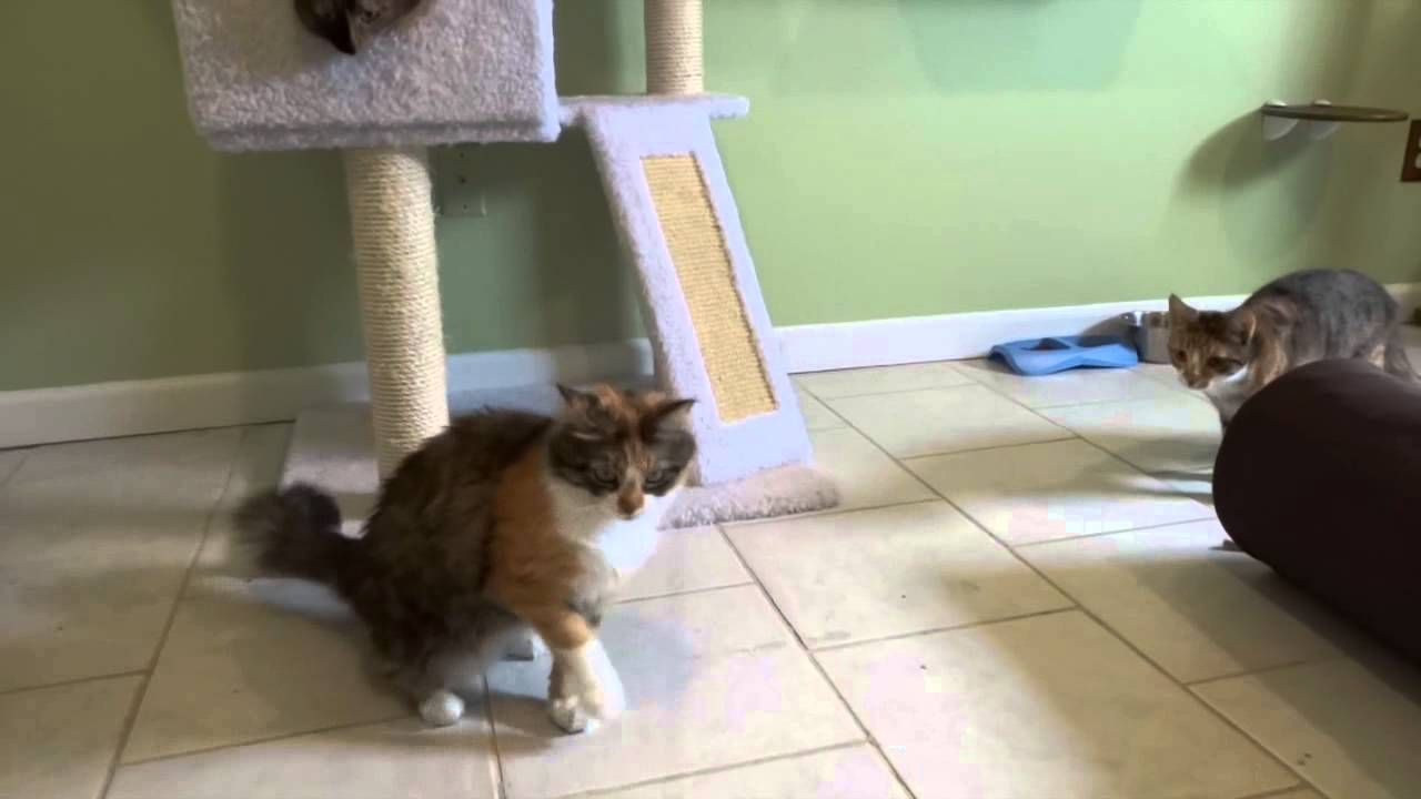 Kitty Playroom And Cat Boarding At All Pets Vet Hospital Pet Vet