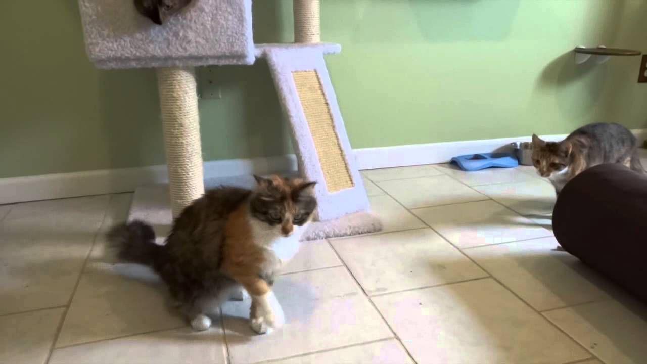 Kitty Playroom And Cat Boarding At All Pets Vet Hospital Pet Vet