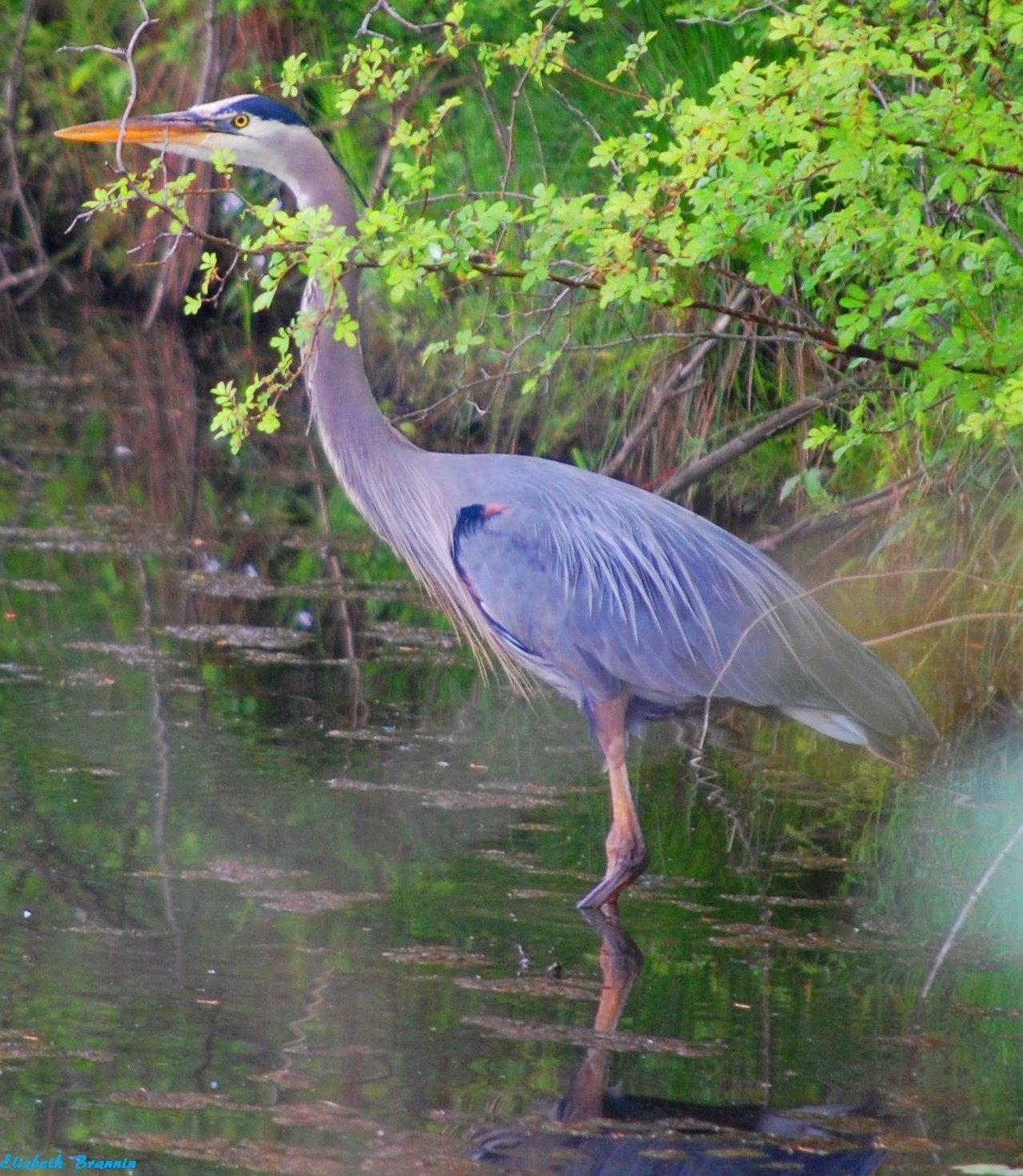 National And Local Weather Radar Daily Forecast Hurricane And Information From The Weather Channel And Weather Com Blue Heron Bird Pictures Birds