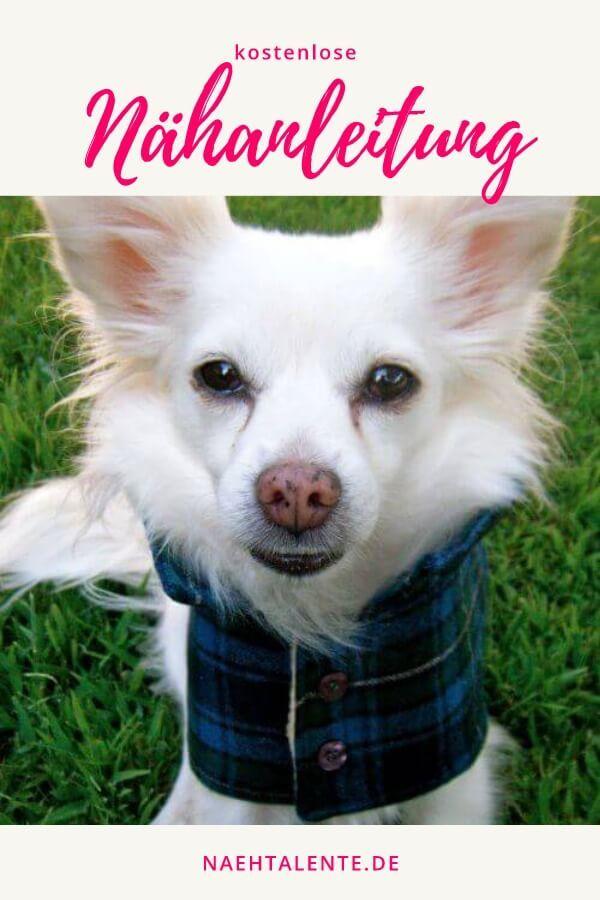 Regenmantel für Hunde einfach nähen mit eigenem Schnittmuster | Rund ...