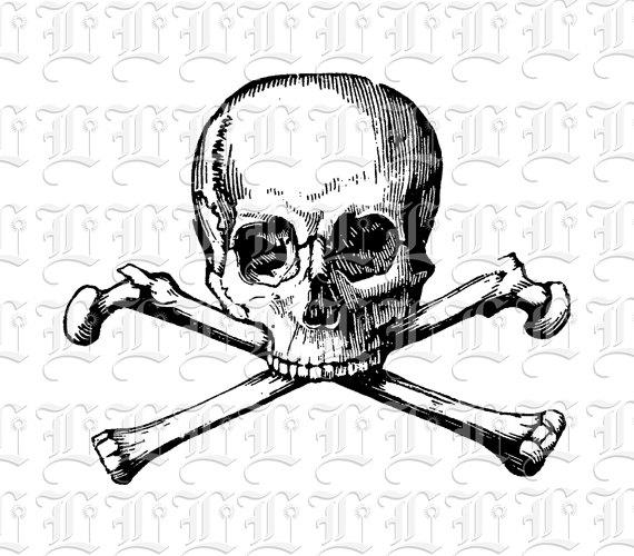 Poison Skull Image Digital Skull Graphic Illustration Printable