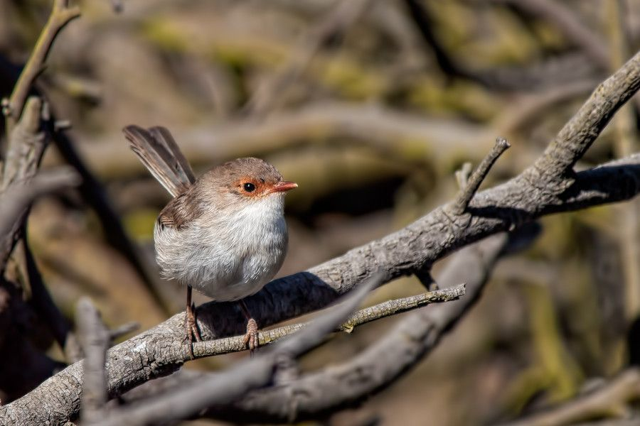 Among the twigs by John Sharp on 500px