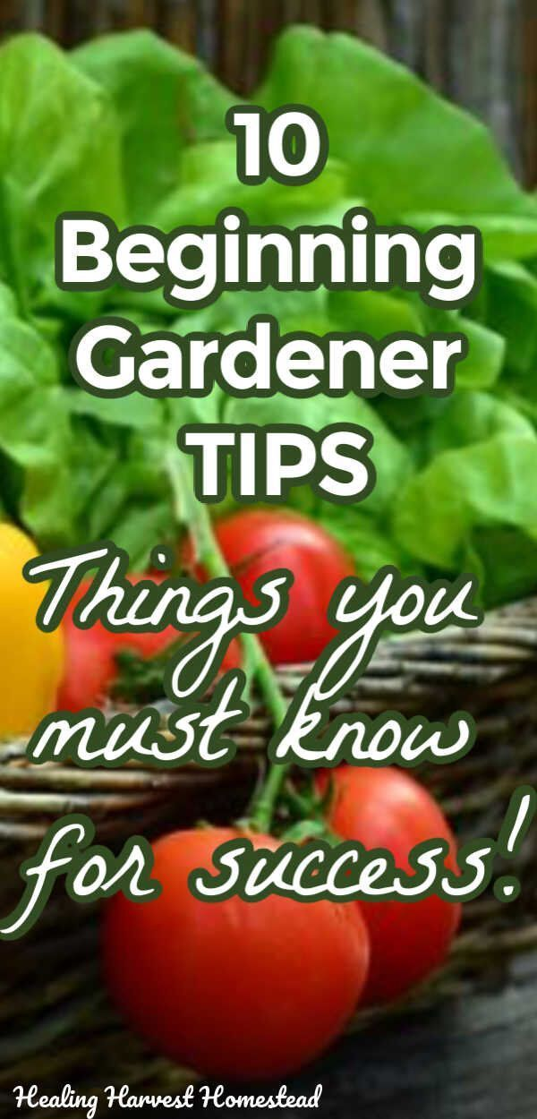 Photo of #gardenideas 10 Tips for Vegetable Gardening Success (Especially for Beginners)