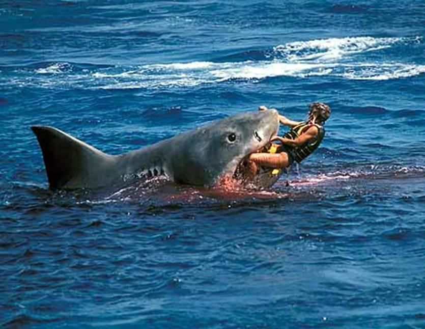 White Shark Attacks..