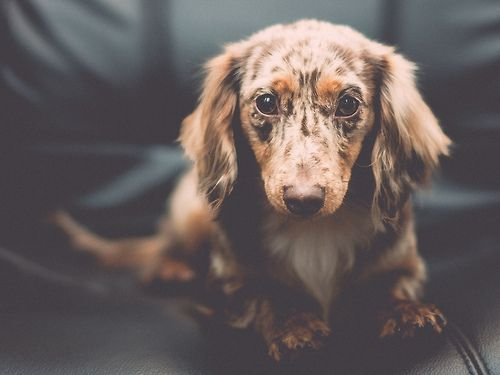 Pin By Kendra Pickren On Animals Cute Animals Animals Puppies