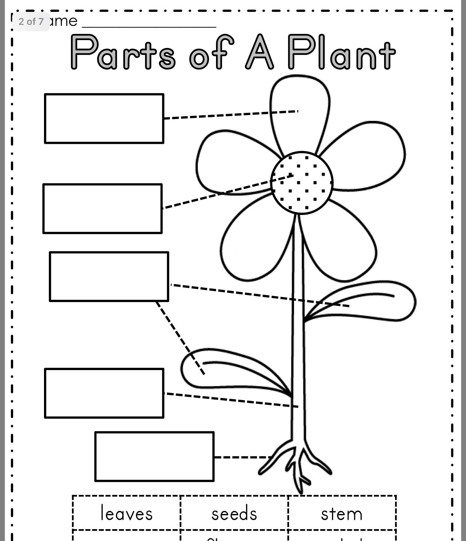 Parts Of A Plant Image By Anne Emmanuel On School