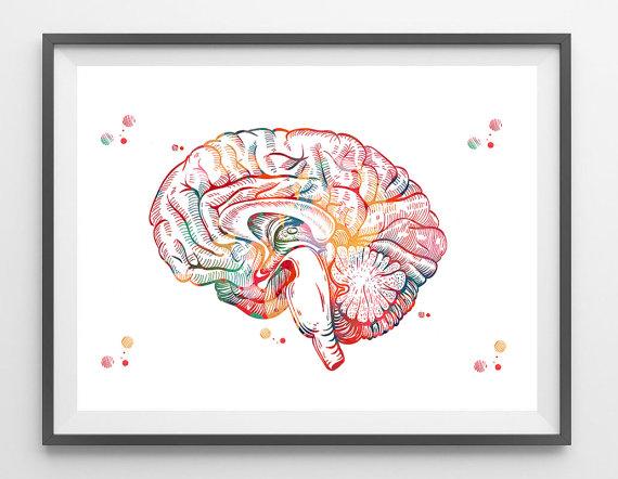 Brain anatomy cross section watercolor print human brain sagittal brain anatomy cross section view watercolor print human brain limbic system poster medical art neurology illustration ccuart Gallery