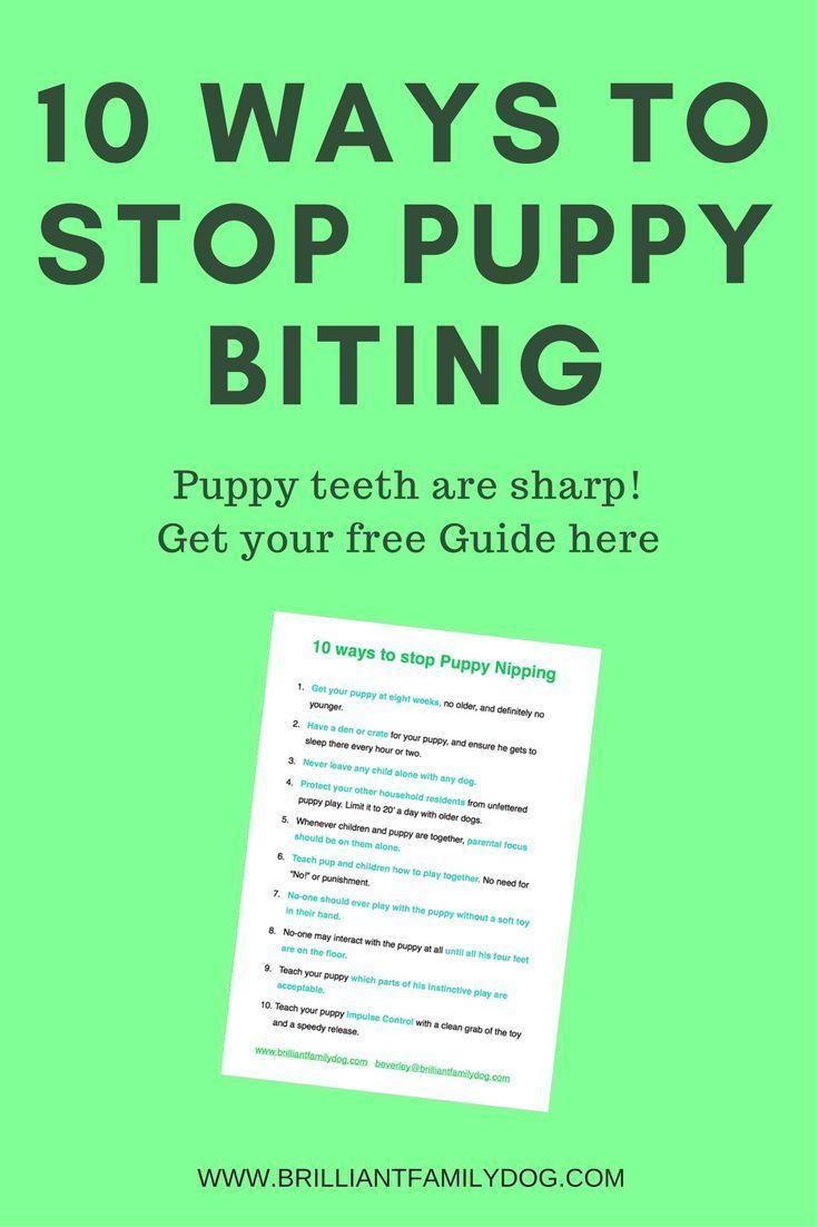 10 ways to stop puppy biting puppy biting stop puppy