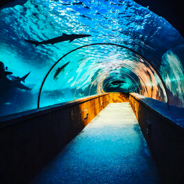 Find your Happy Place!  Bahamasdaypass.com has your Atlantis Aquaventure Passes for cruise passengers with guaranteed admission .