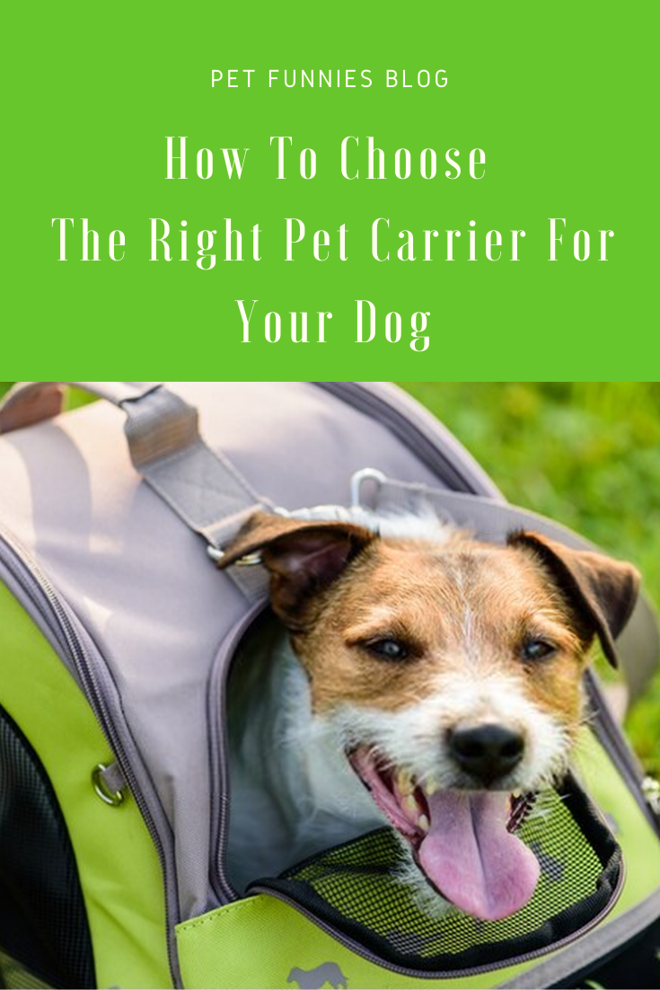 How To Choose The Right Pet Carrier For Your Dog Pet Carriers Your Dog Pets