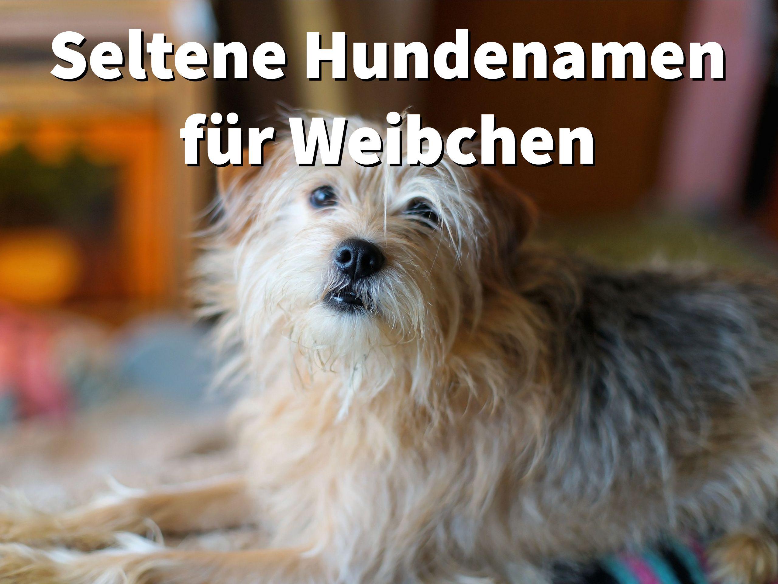 21 Seltene Hundenamen Fur Weibchen Mit Bedeutung Und Geschichte Des Namens Hundenamen Namen Fur Hunde Weibliche Hundenamen