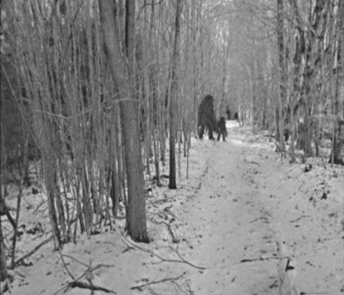 Old Bigfoot photos from New York State found in deceased ...