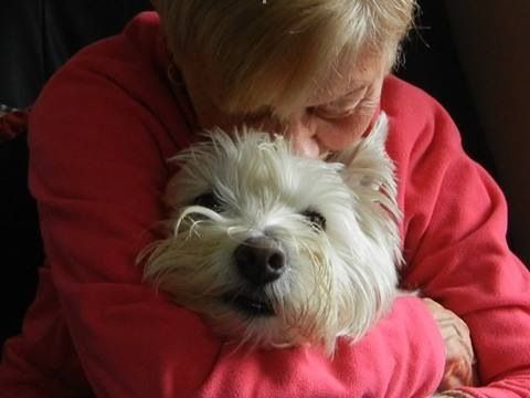 Image result for westies dog, hugging