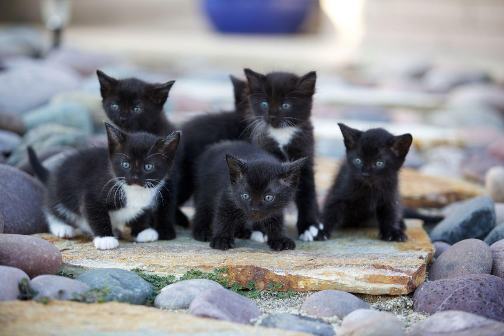 Your New Kitten Dog Cat Pictures Kitten Cat Aesthetic