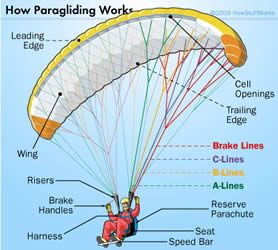 Diagram Of A Paraglider Paragliding Skydiving Hang Gliding