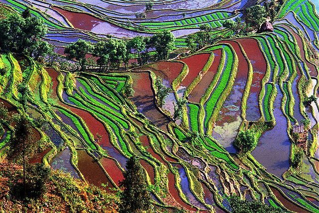 Rice Field In Yunnan China Colorful Landscape Intro To Art Yunnan