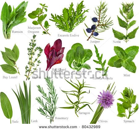 stock-photo-collection-set-of-fresh-herb-with-names-isolated-on-a ...