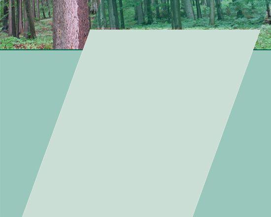 ...::: BPP - drevo :::...