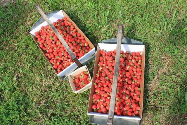 Ever Never Again: Fresh Food Friday: Strawberries