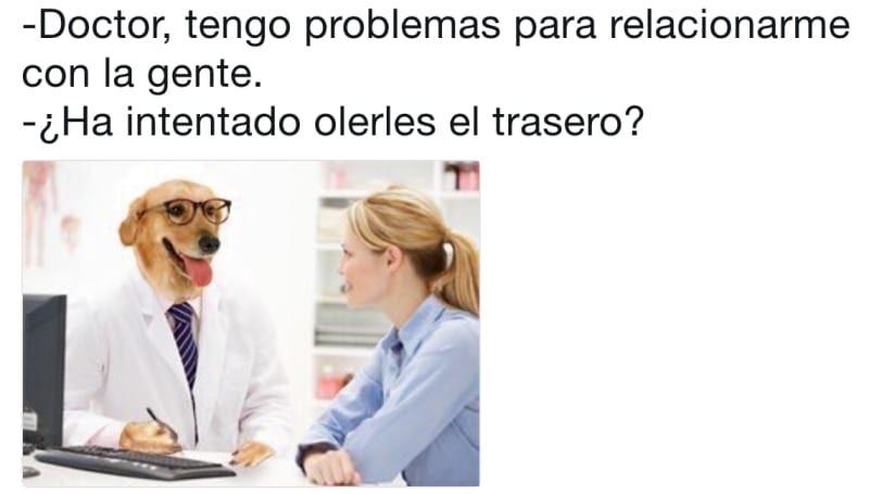 Estos 21 Memes Del Doctor Perro Son La Cura Para Todos Tus Males Memes Doctor Curar