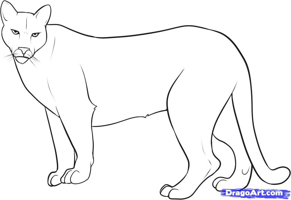 How To Draw Mountain Lion Lion Coloring Pages Mountain Drawing Coloring Pages
