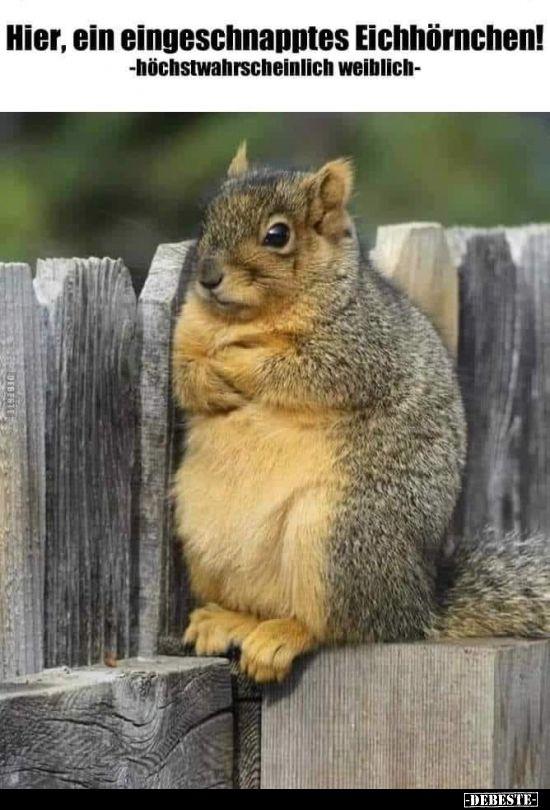 Hier, ein eingeschnapptes Eichhörnchen!.. | Lustiges