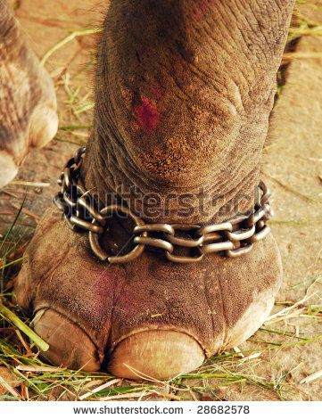 6296763a5ba3 Chained bloody elephant